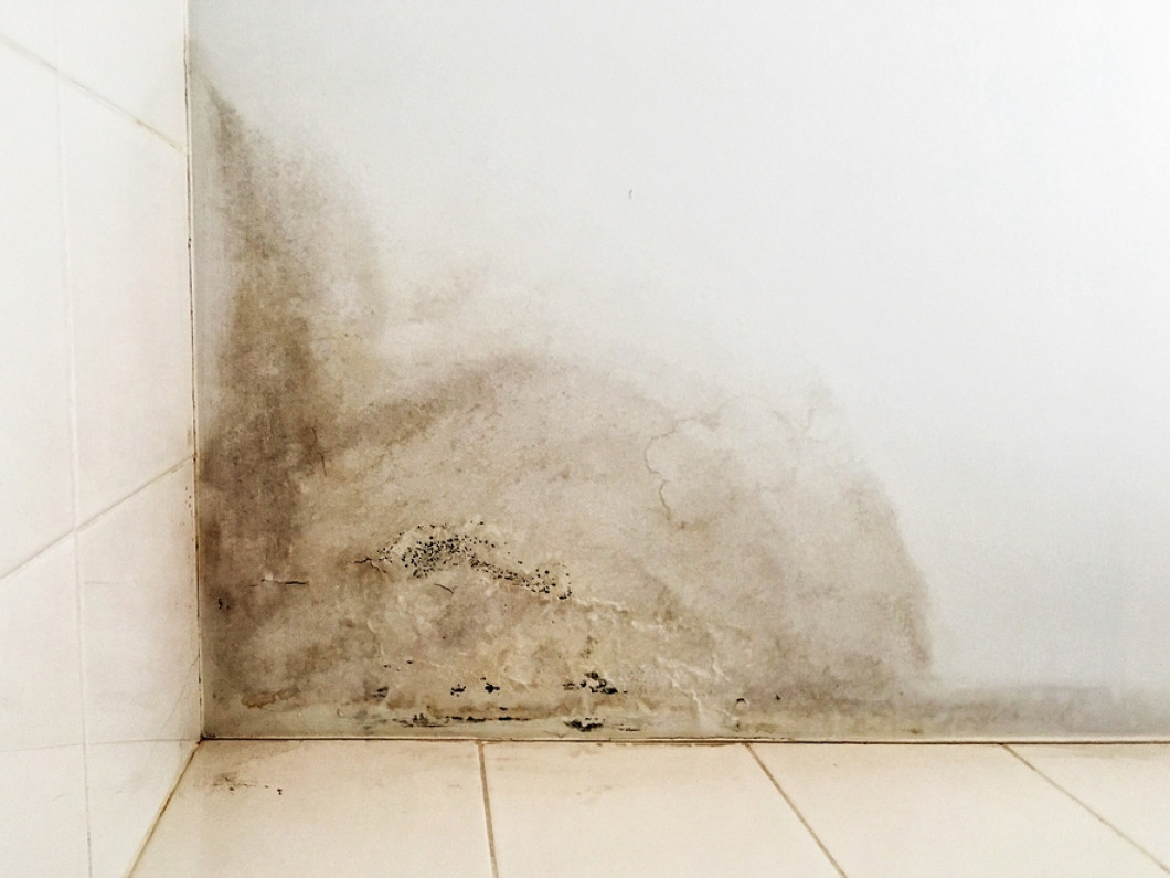 Banish Mold From Your Home